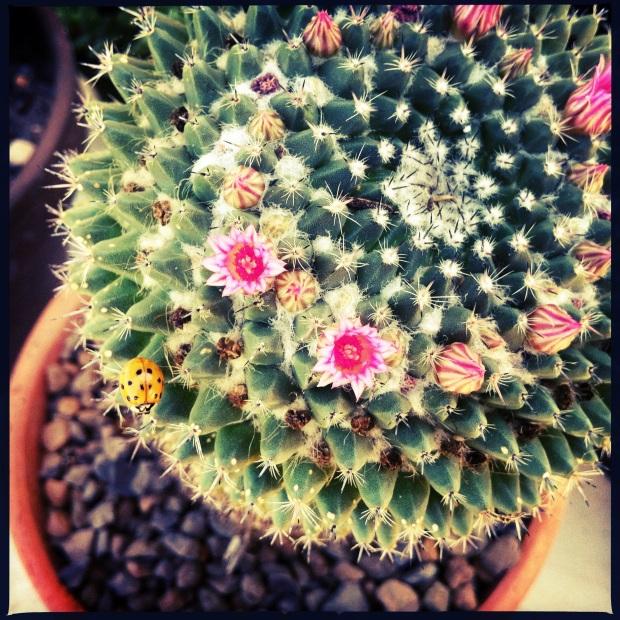 cactus with ladybug
